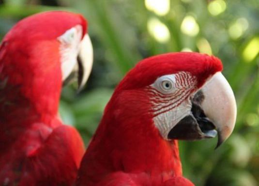 Як бачать птахи?