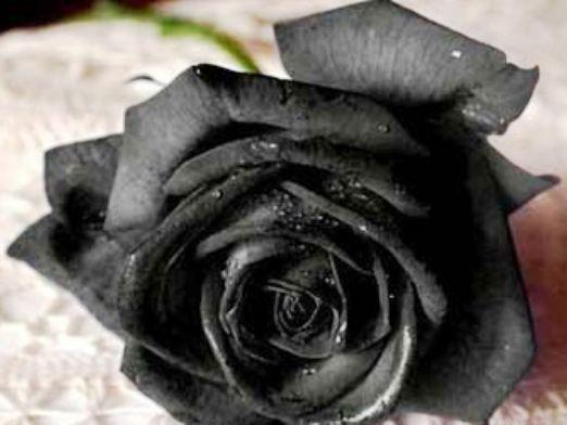 Які квіти на похорон?