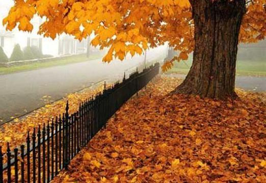 Чому листя жовтіє і опадає?