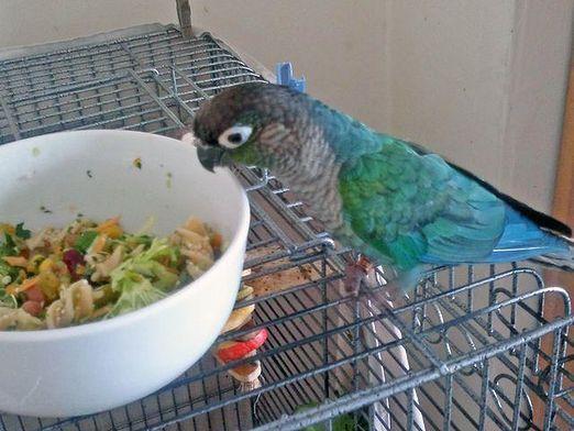 Чому папуга не їсть?